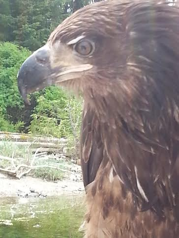 eagle comes to visit